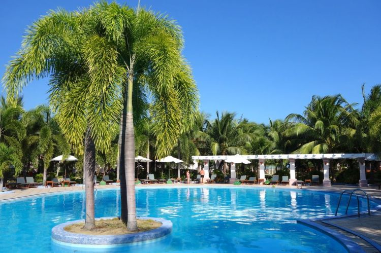 Klart vi ska ha palmer i poolen!