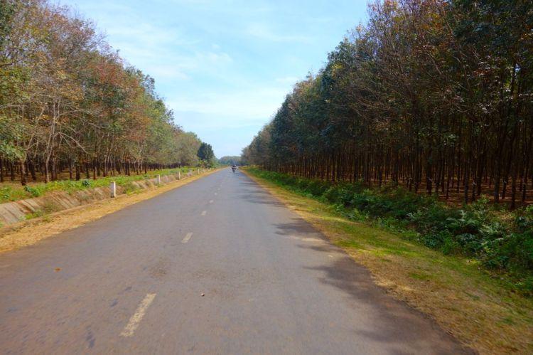 Sent på dagen breder vägen ut sig, trafiken försvinner och vårt enda sällskap var rad efter rad med gummiträd.