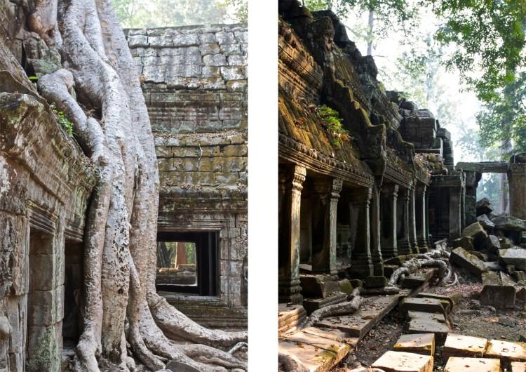 Träden tar över templen på många platser. I rötternas jakt på fäste i jorden förstör de templen, så det finns risk för att de kapas.