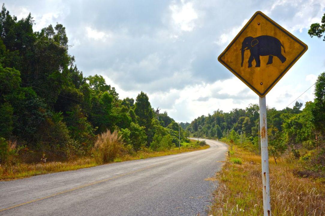 Varning för elefanten! Vi kom inte närmare dem än såhär tyvärr (och eftersom det enligt uppgift bara finns ett 20-tal kvar i det vilda var nog inte chansen så stor).