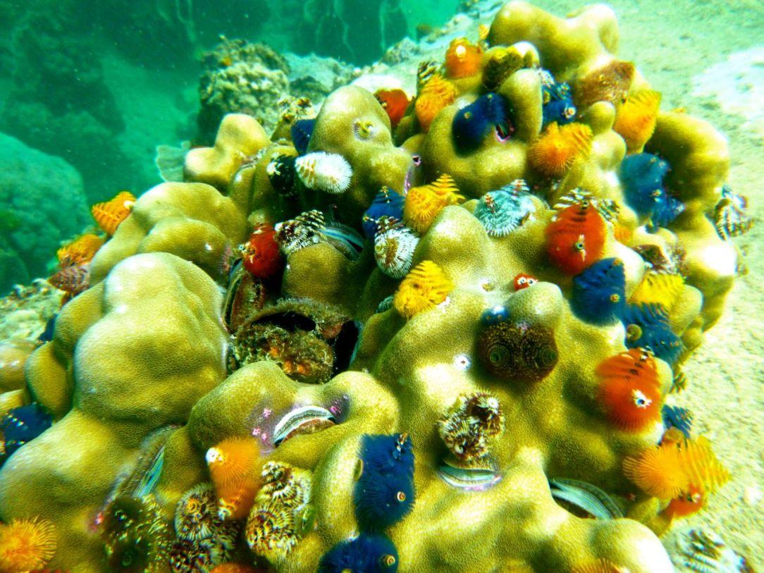 Färgglada korallträd, eller en Avatar-animation?