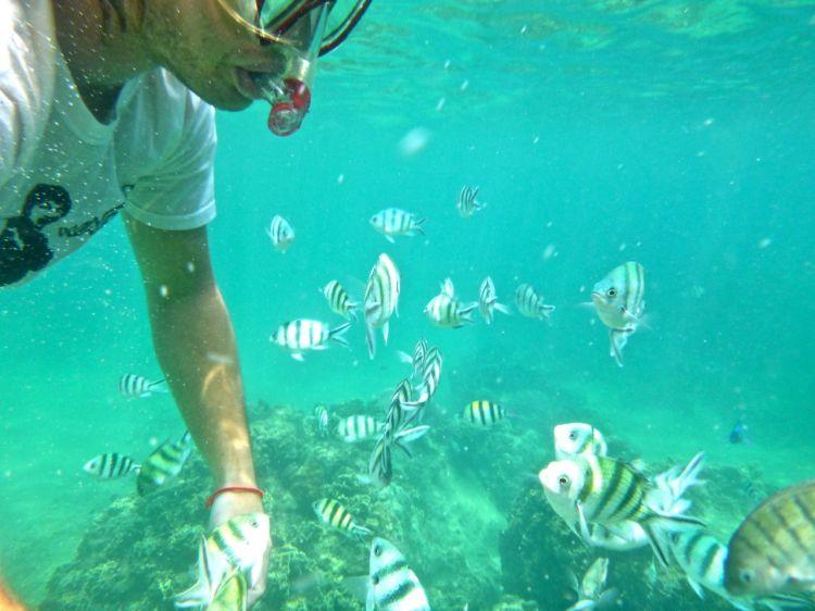 Omringade av stirrande småfisk. De förföljde oss en god stund och jag fnittrade så jag fick en kallsup. Det skrämde dock inte ens den största av papegojfiskar som bara spottade ut lite korall och fortsatte snaska på en ny formation.