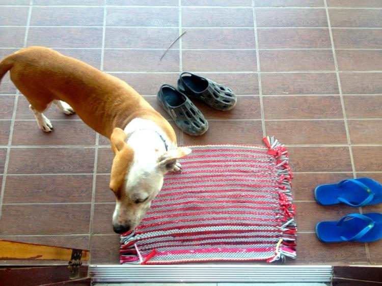 När vaktmästarn kommer på besök har han med sig både barn och hund. Om minstingen är med sitter hen på hans axlar och håller han hårt i håret. Om de andra är med pyser de direkt ut på balkongen och sneglar nyfiket. Hunden busar omkring på dörrmattan och vill sååå gärna komma in, men stannar väluppfostrat utanför om han inte blir inbjuden.