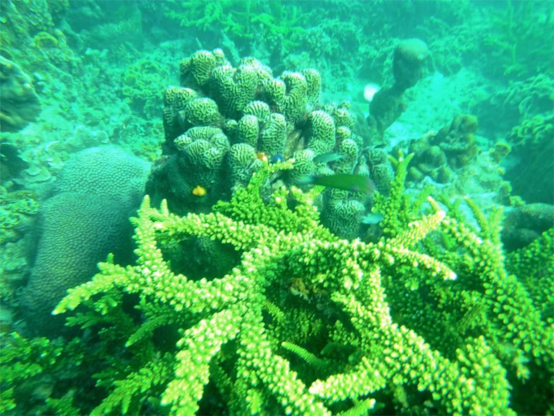 Vilka koraller!!