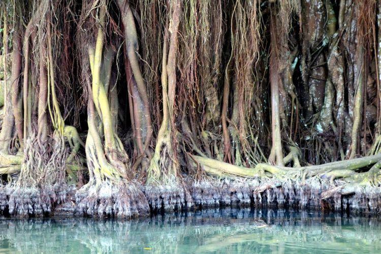 Det förtrollade trädet vid källan. Lite mystiskt är det allt!