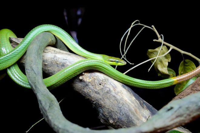 Ormar är alltid både fascinerade och lite ... läskiga. Men vackra!