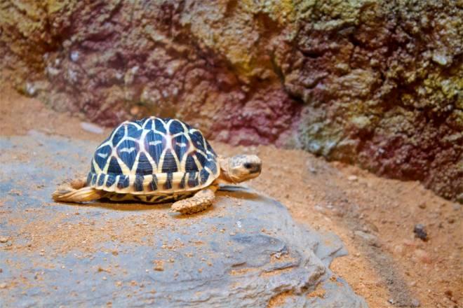 Sköldpaddor är en av mina absoluta och det finns många i parken. Den här lilla rackaren var en av de minsta och hen försökte simma, på land.