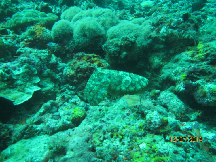 Är det en sten? En bläckfisk? Nej, det är en cuttlefish (ingen aning om vad de kan heta på svenska. De kamouflerar sig snabbt genom att byta färg och ser störtcoola ut.