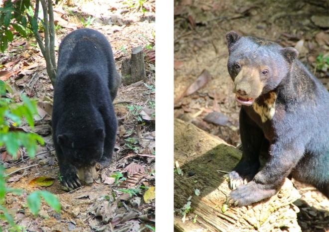 Kolla öronen! Väldigt nallebjörnskt, men ändå inte ett perfekt husdjur.