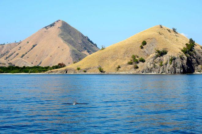 Det obligatoriska delfinsällskapet! Pirret när en fena bryter vattenytan, och sedan en till, och en till, blir verkligen aldrig mindre.