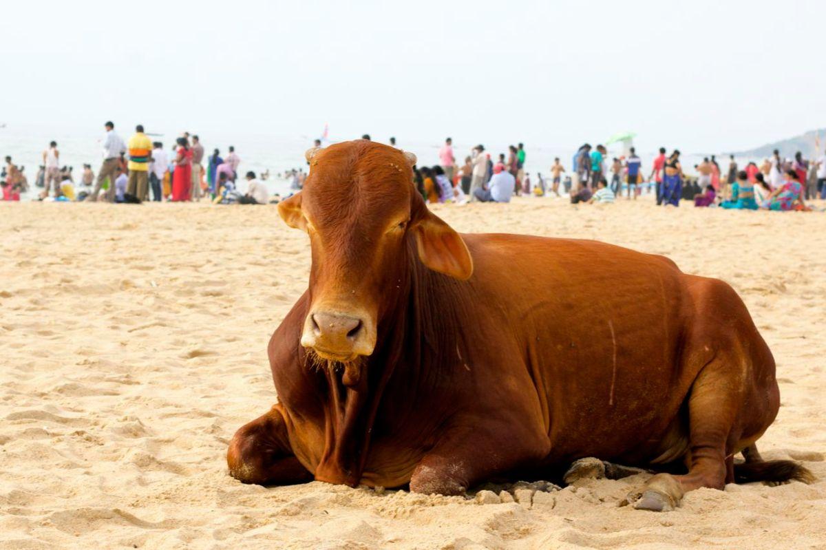 Hur var egentligen stränderna i Goa?