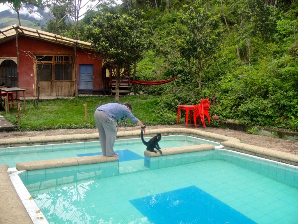 Mattias får en rundvandring av en spider monkey. Apan har tydligt visat vem som bestämmer, och när Mattias accepterat att följa med runt och spana in alla vrår blir de bästisar. Apan vill gärna få i Mattias i poolen. Det trixigaste han gjorde var att leda över honom på den smala gången. Jag skrattade, och var avundsjuk.