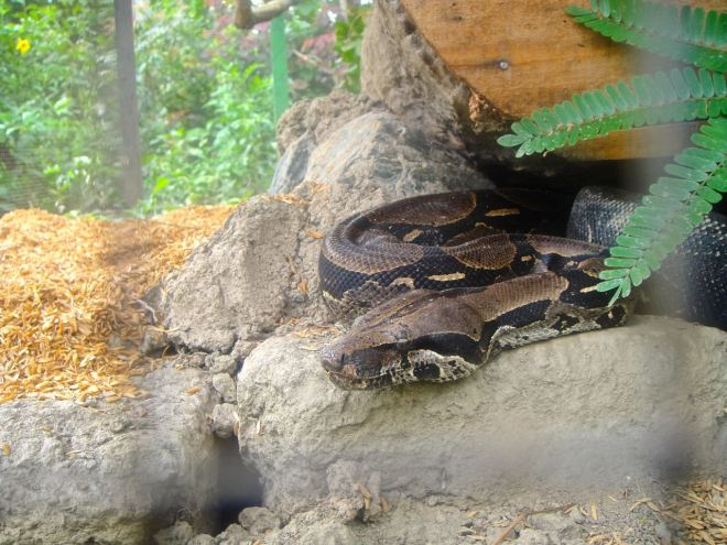 De djur som kan skadas av andra djur, eller skada människor är oftast i bur. Den här ormen gick vi snabbt förbi.