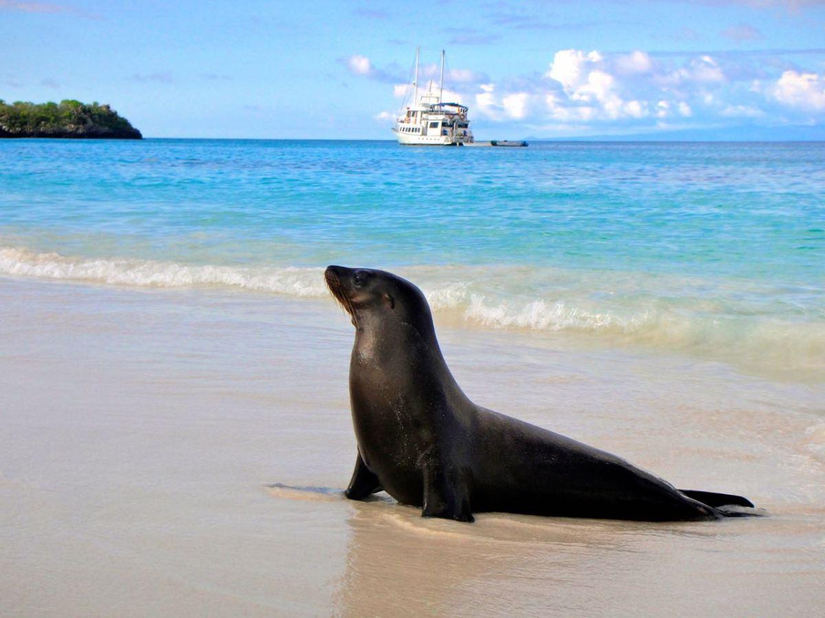 Galapagos – världens vackraste plats