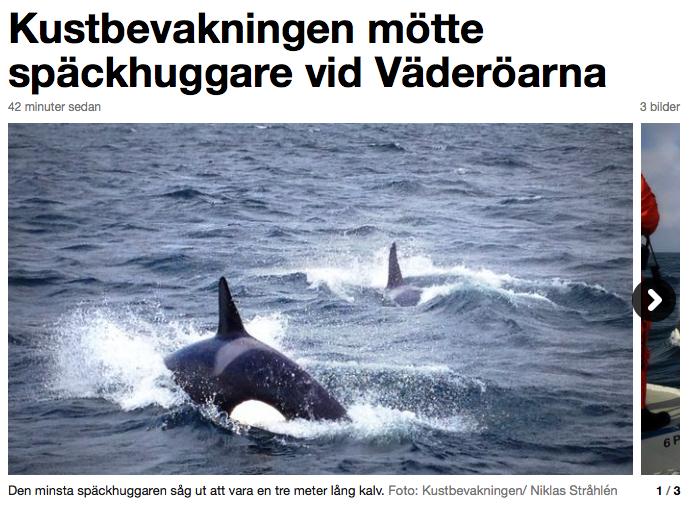 Bild från SVT / Kustbevakningen / Niklas Stråhlén