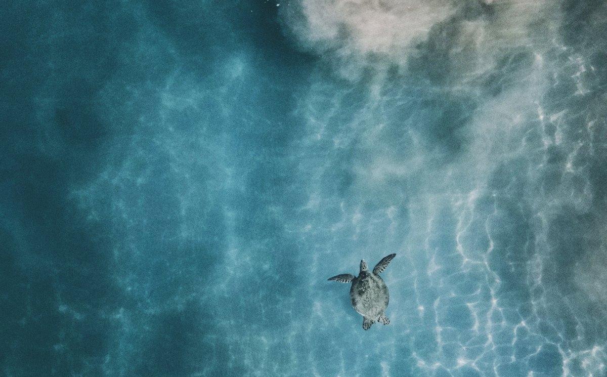 Det blir fler sköldpaddor i världen
