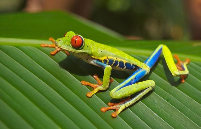 tree-frog-69813__480